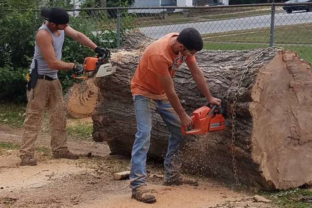 Tree Removal Services, Dangerous Tree Removal   Abbeville ...